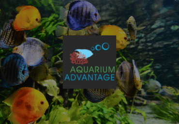 Aquarium Advantage Website
